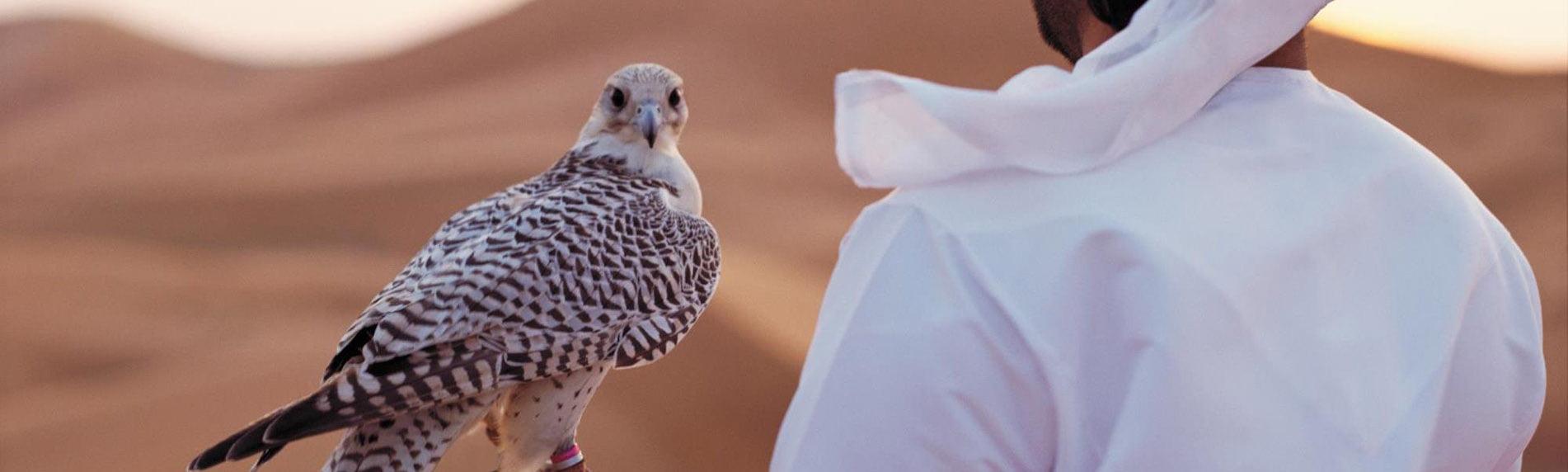 falcon tour abudhabi