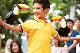 jurong bird park show singapore