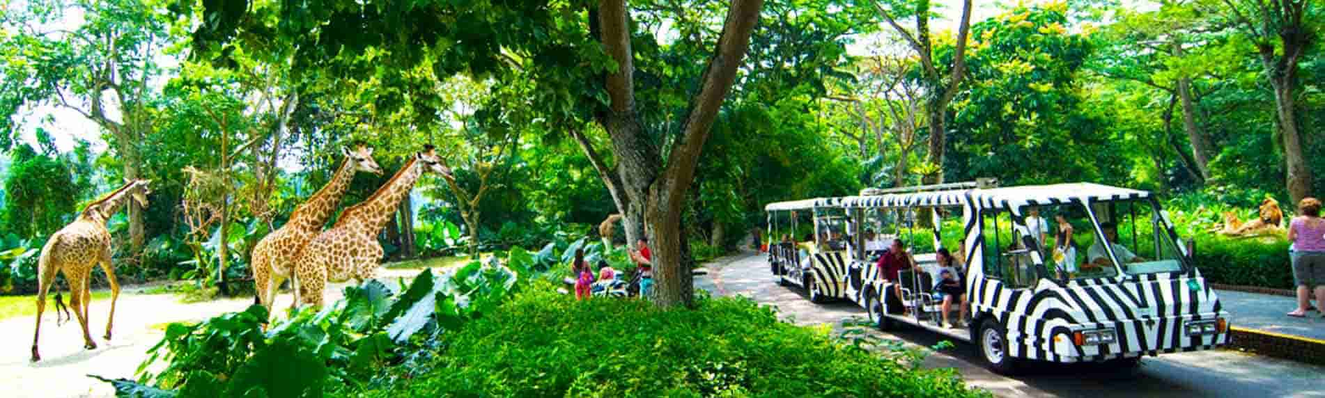 zoo with tram ride