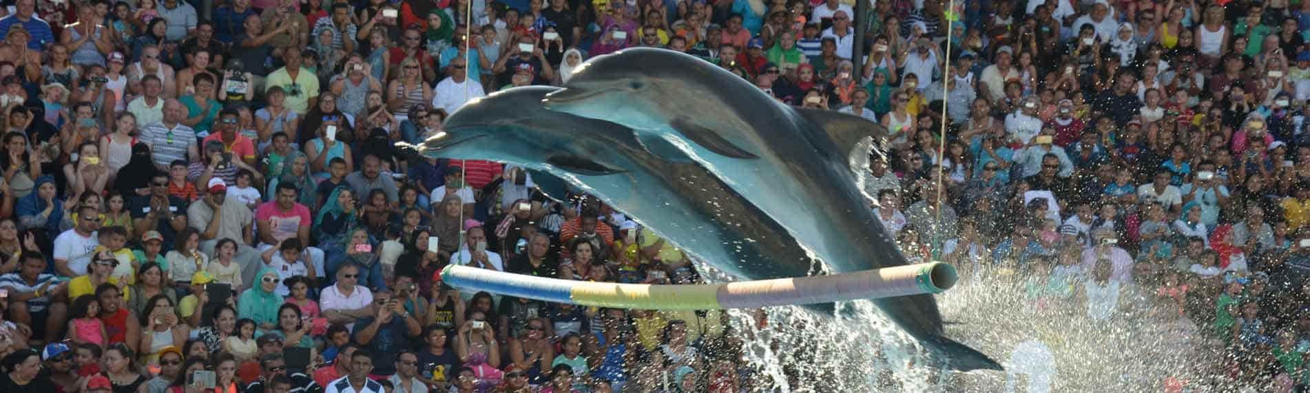 pattaya dolphin show thrill