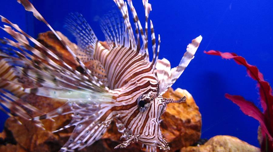 beautiful under water world