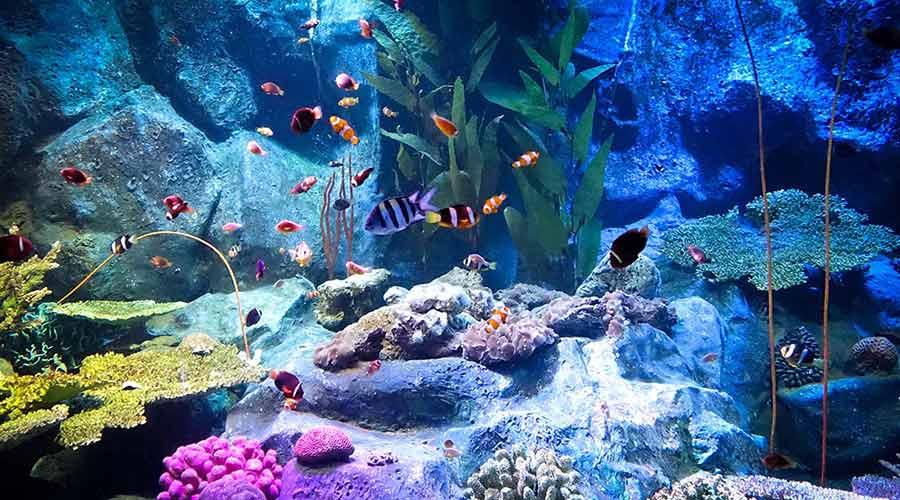 under water fish pattaya