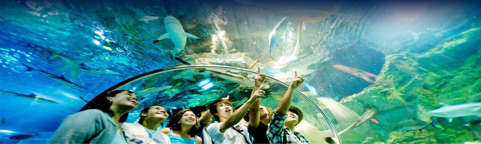 underwater world fun pattaya