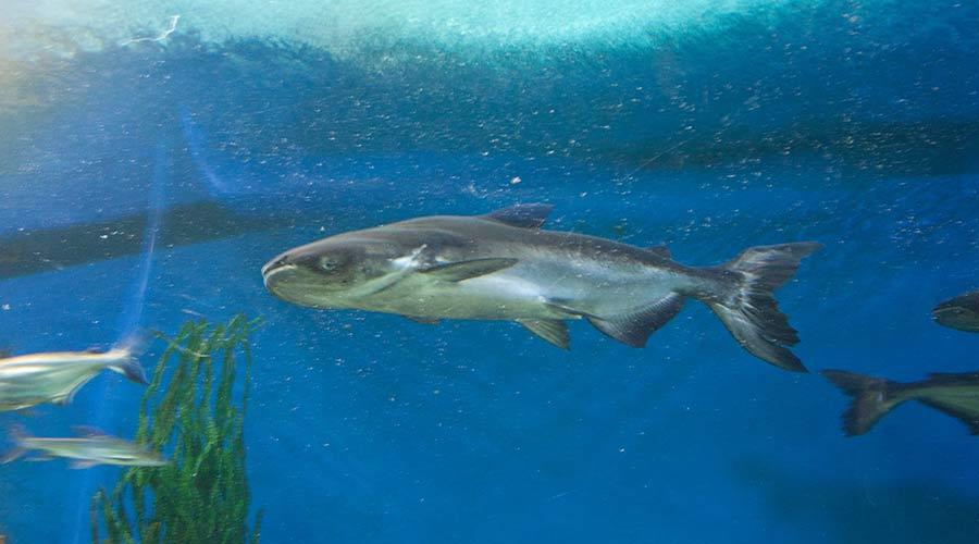 water world fish