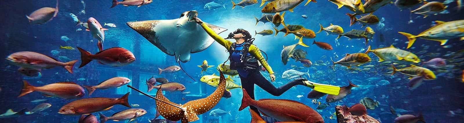 atlantis-aquaventure-amazing-school-trip