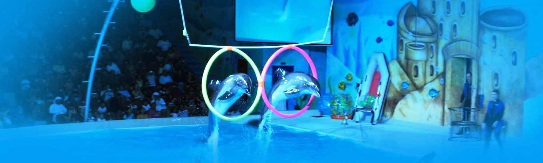 dubai dolphinarium fun