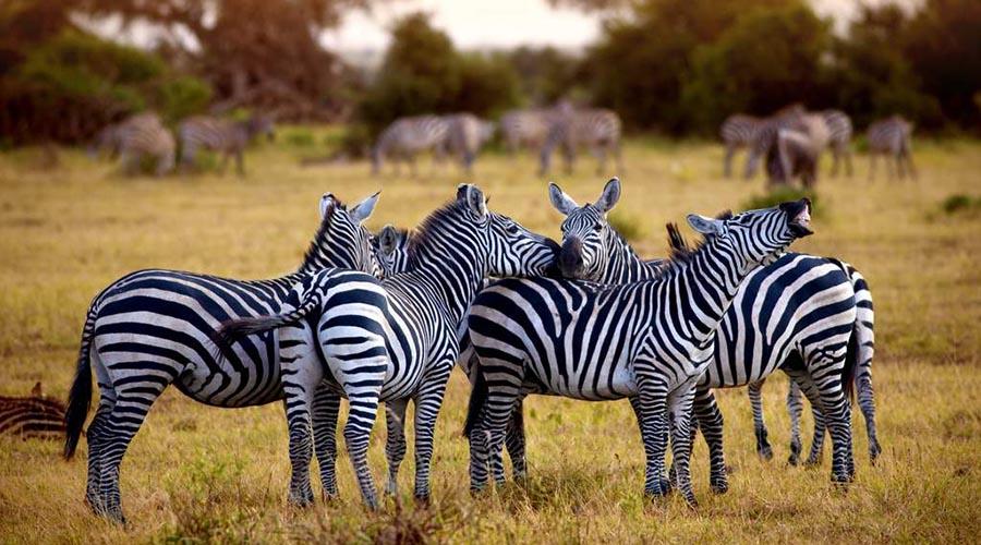 aquila reserve wildlife