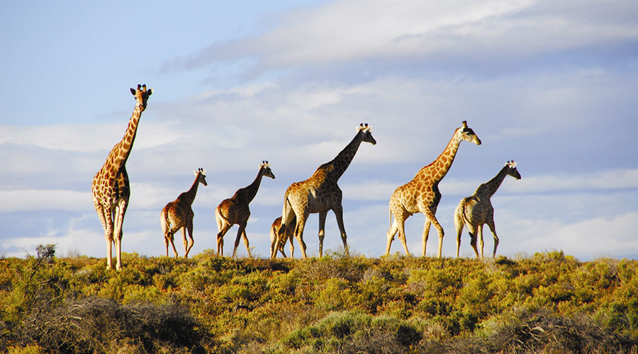 game reserve safari