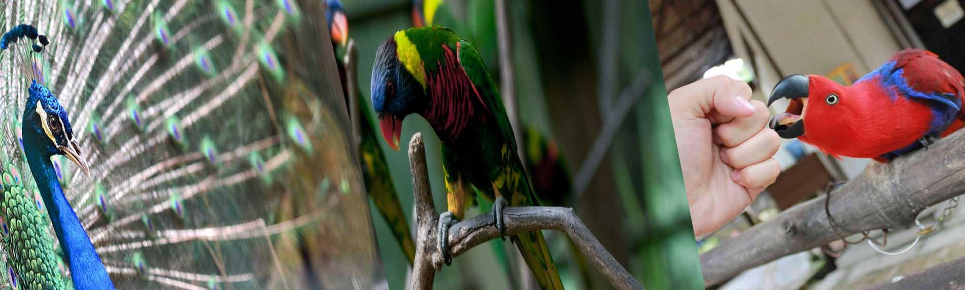 penang bird park malaysia