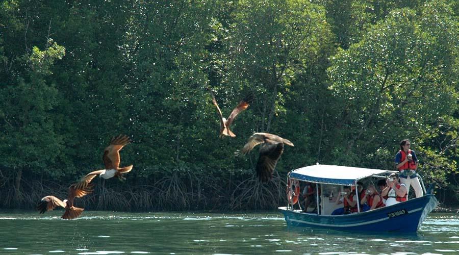 langkawi magroves