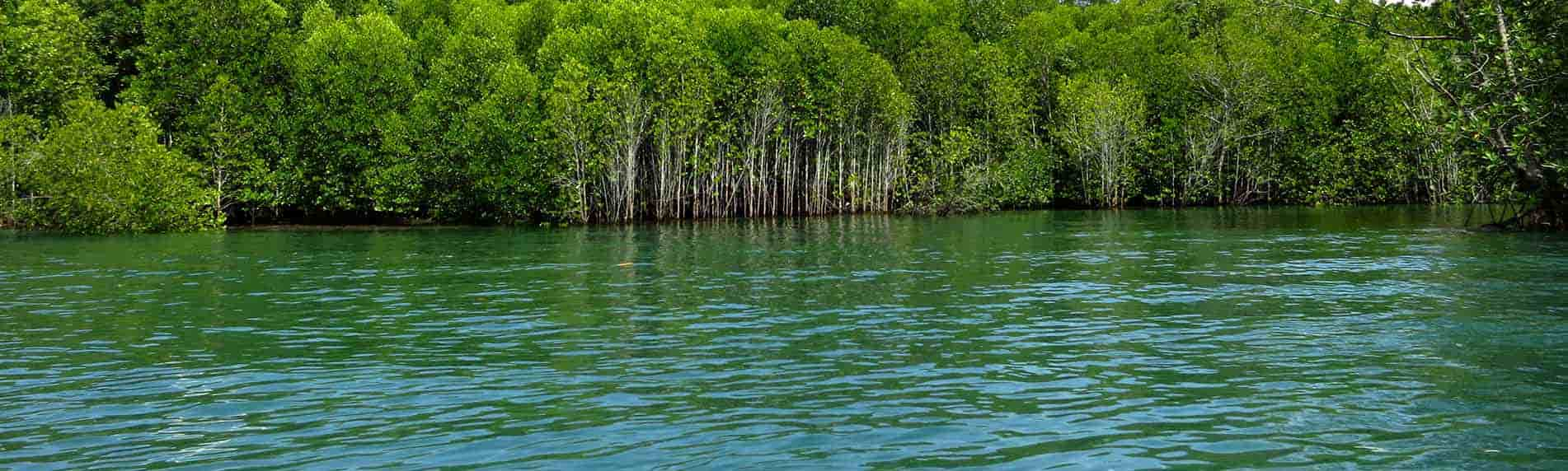 mangroves and limestone tour