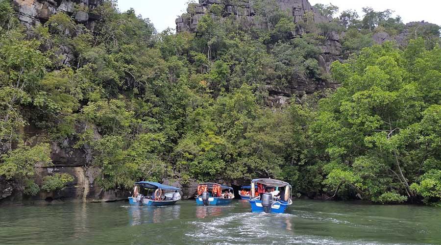 mangroves boat tour